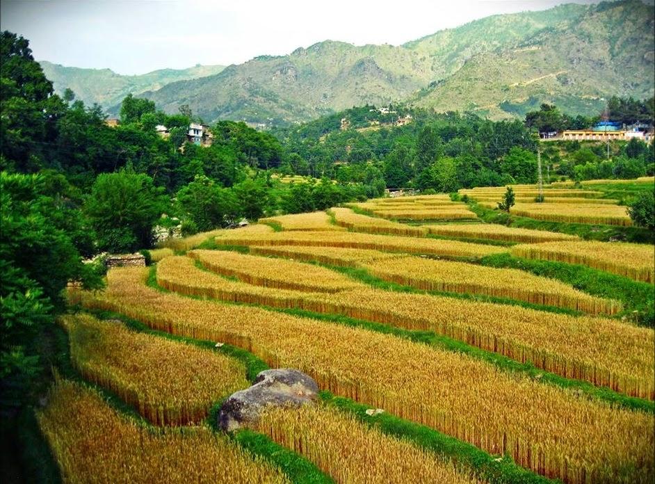 پاکستان کے ساتھ الحاق سے پہلے وادئی سوات ایک ریاست کی شکل میں معاشی اور اقتصادی طور پر خود کفیل تھی۔ الحاق کے بعد سوات کے جنگلات، یہاں کا انفرا سٹرکچر، معیشت اور سیاحت سب کچھ تباہ وبرباد ہو کر رہ گیا ہے۔