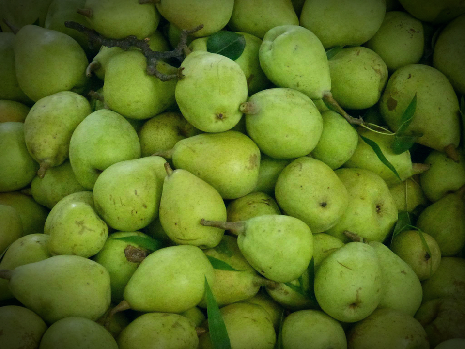 ناشپاتی وہ پھل ہے جس کے بطور پھل استعمال کے علاوہ بطور سبزی ترکاریوں اور مختلف کھانوں میں آلو کی جگہ بھی استعمال کیاجاتا ہے۔ ناشپاتی کے پھل کے چھلکے کا قہوہ بھی بنتا ہے جو کہ دل کی بند شریانوں کی تکلیف کیلئے بہت مفید ہے۔