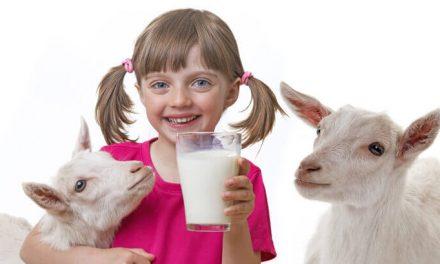 بکری کے دودھ کے یہ فائدے جانتے ہیں؟